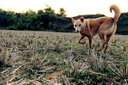 walking companion for mugilu guests