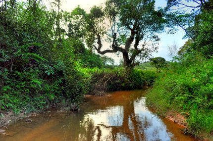 homestay in sakleshpur, Stream